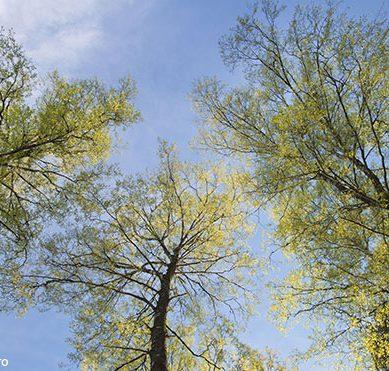Ilmastohaaste edellyttää suomalaiselta puunkäytöltä merkittäviä uusia innovaatioita