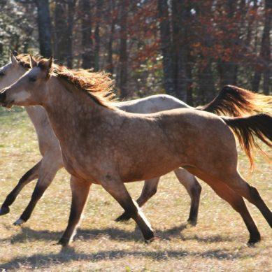 Kahdesta hevosesta omakotitalon vuoden lämpöenergia