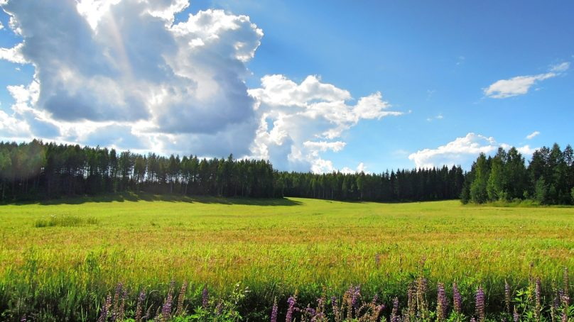 Bioenergia – muutakin kuin puun polttamista?
