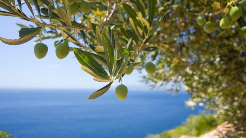 Espanjassa tuotetaan sähköä oliivinkivistä