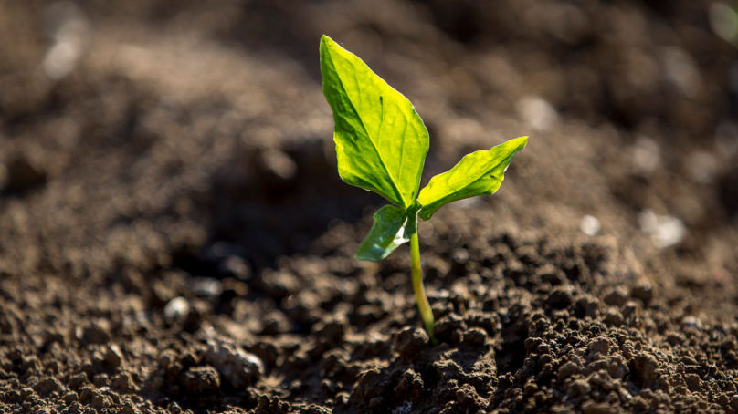 Hae Tekesin kärkihankerahoitusta biotalous- ja cleantech-projekteille