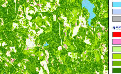 Satelliitit kartoittavat metsiin sitoutuneen hiilen jopa kymmenen metrin tarkkuudella