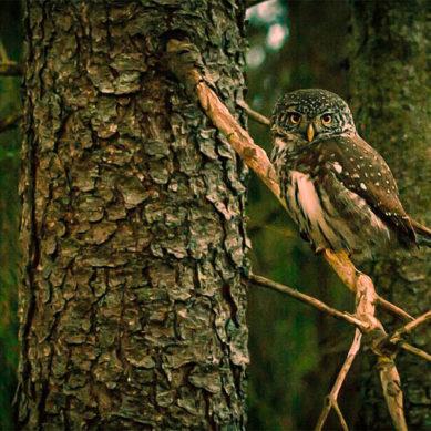 Tutkijat ilmaisevat huolensa Suomen metsänkäyttösuunnitelmien vaikutuksista