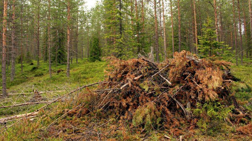 Sampo Soimakallio: Avaimia metsien käytön ilmastovaikutusten ymmärtämiseen
