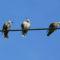 Pohjoismaiden sähkömarkkinat jatkavat yhtenäistymistään