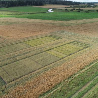 Suomalainen BioA haluaa korvata kemialliset lannoitteet kierrätetyllä