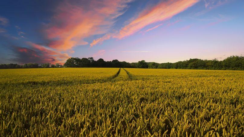 IPCC: maankäytöllä on suuri merkitys ilmastonmuutoksessa