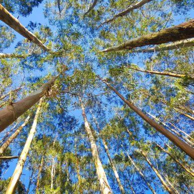 Istutetaan puu – tai useampikin